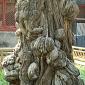 Čína 2012-20